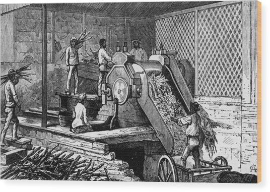 Sugar Cane Crushing Wood Print by Hulton Archive
