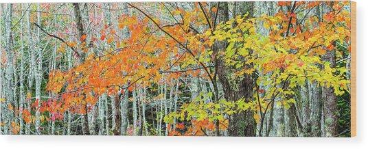 Sugar Maple Acer Saccharum In Autumn Wood Print