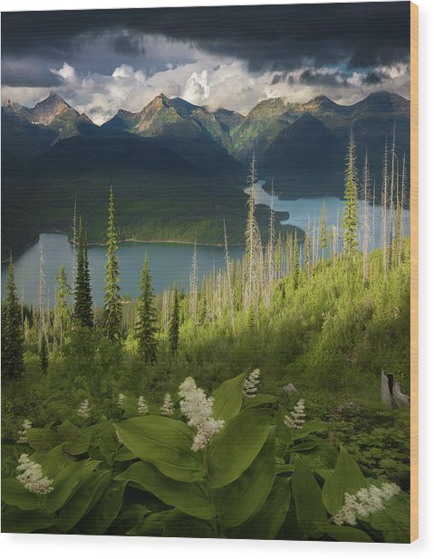 Summer Bloom / Hungry Horse Reservoir, Western Montana  Wood Print