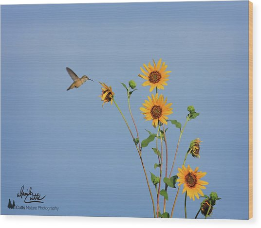 Summer Day Hummingbird Wood Print