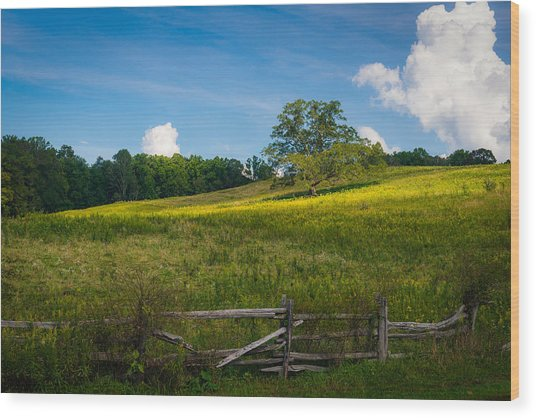 Blue Ridge Parkway - Summer Fields Of Yellow - Lone Tree Wood Print