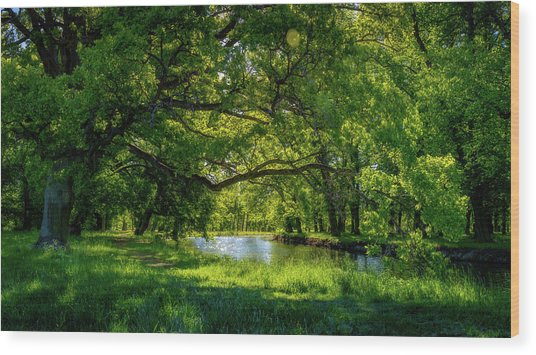Summer Morning In The Park Wood Print