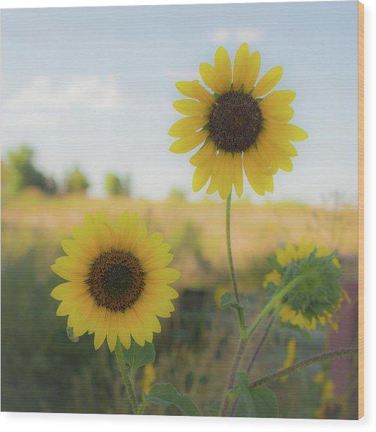 Summer Softness Wood Print