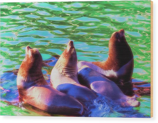 Sun Basking Seals Wood Print