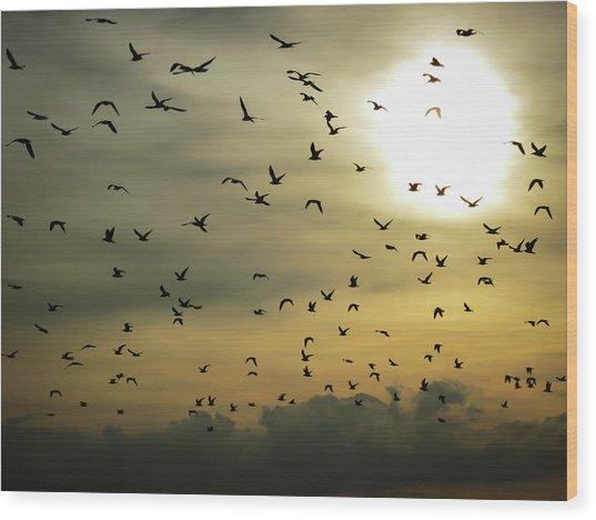 Sun Flock Wood Print