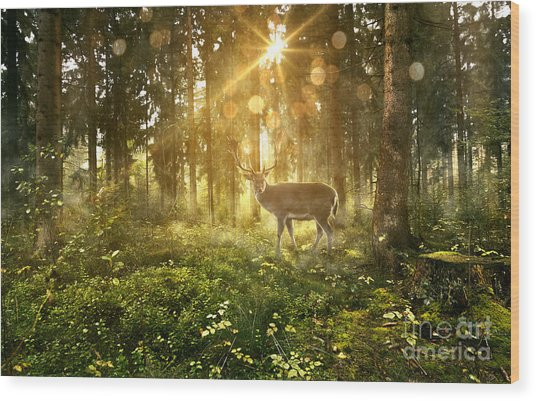 Sun Shines Into A Fairytale Forest Wood Print