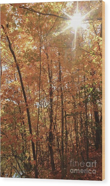 Sunburst Of Fall Wood Print