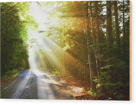 Sunflare On Road Wood Print