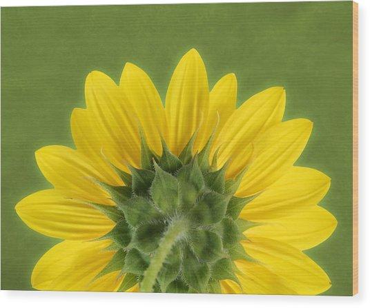 Sunflower Sunrise - Botanical Art Wood Print
