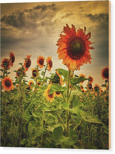 Wood Print featuring the photograph Sunflowers. Horytsya, 2014. by Andriy Maykovskyi