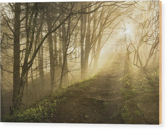 Sunlight Streaming Through Fog Wood Print by Adam Jones