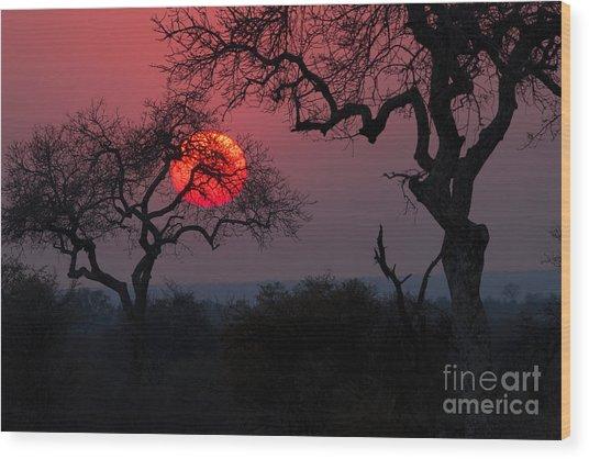 Sunrise In The African Savanna Kruger Wood Print