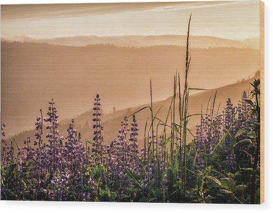 Sunset Among The Lupine Wood Print