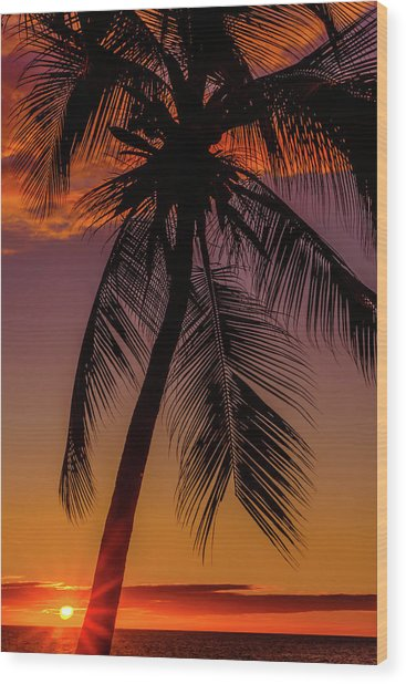 Sunset At The Palm Wood Print
