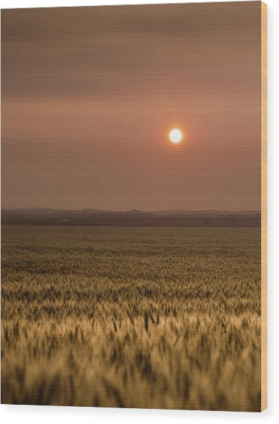 Sunset Over A Wheat Field 2 Wood Print
