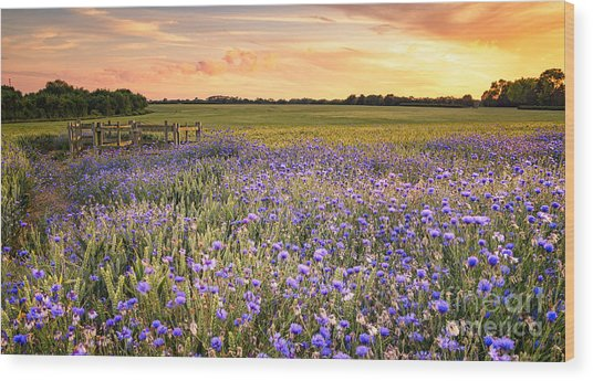 Sunset Over A Wild Flowers In Cornwall Wood Print