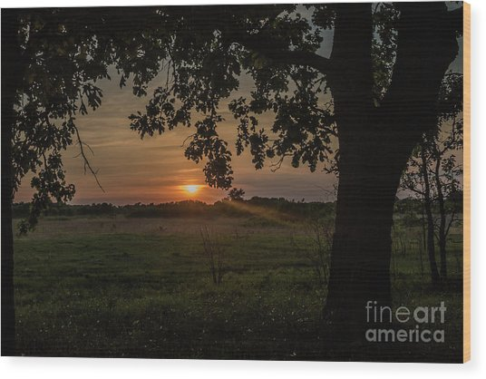 Sunset Under The Tree Wood Print