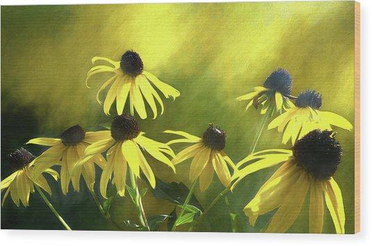 Sunshine On Black Eyed Susan Wood Print