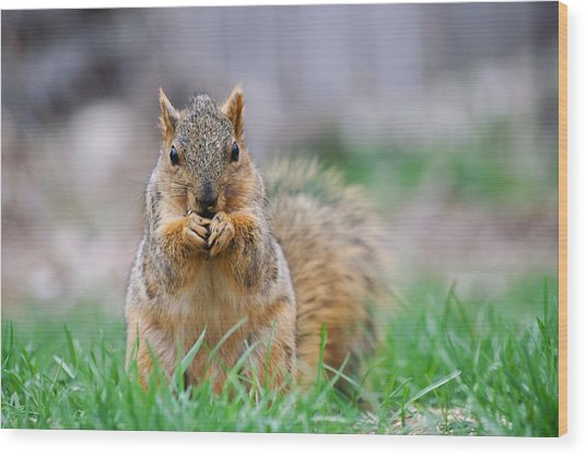 Super Cute Fox Squirrel Wood Print