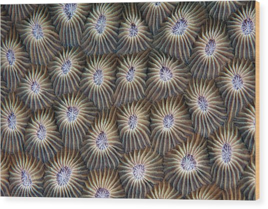 Surface Of Coral Wood Print
