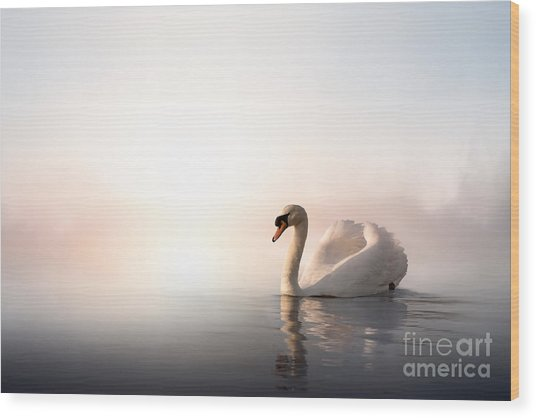 Swan Floating On The Water At Sunrise Wood Print