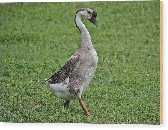 Swan Goose Strut Wood Print