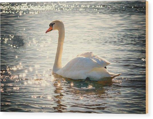 Swan On Golden Waters Wood Print