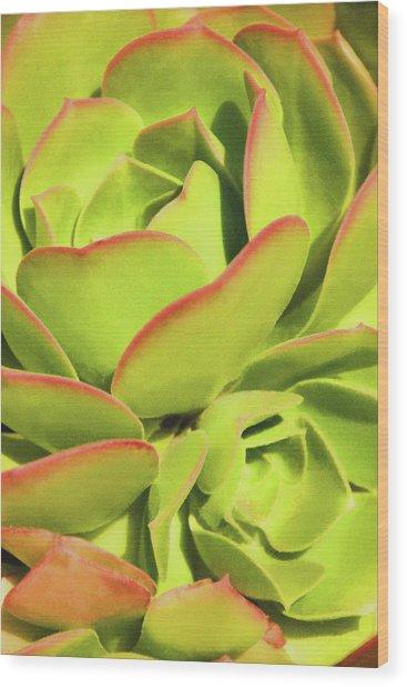 Sweet Succulents I Wood Print