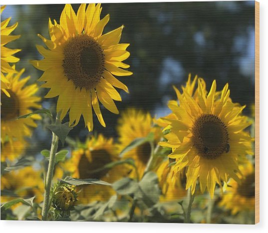 Sweet Sunflowers Wood Print