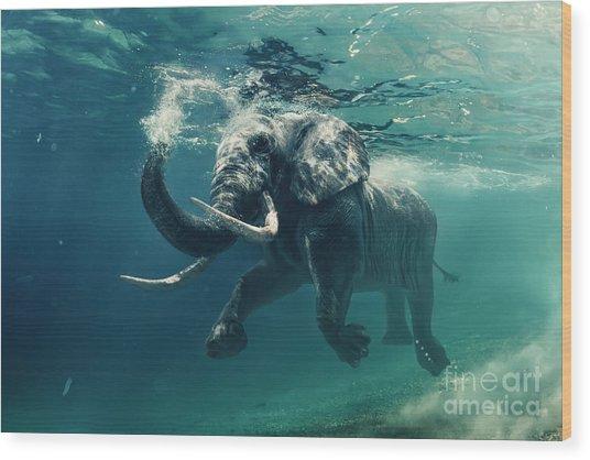 Swimming Elephant Underwater. African Wood Print