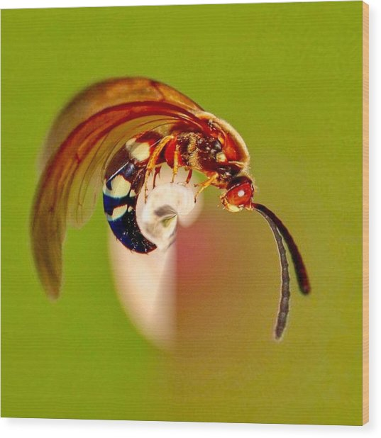 Swirly Wasp Wood Print