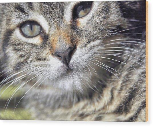 Tabby Kitten Wood Print by JAMART Photography