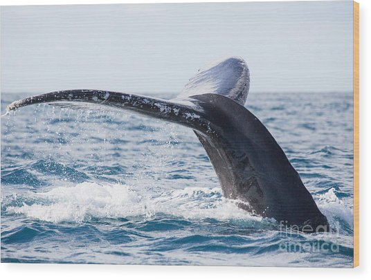 Tail Of Whalewhale Show The Tail Above Wood Print by Kirill Dorofeev