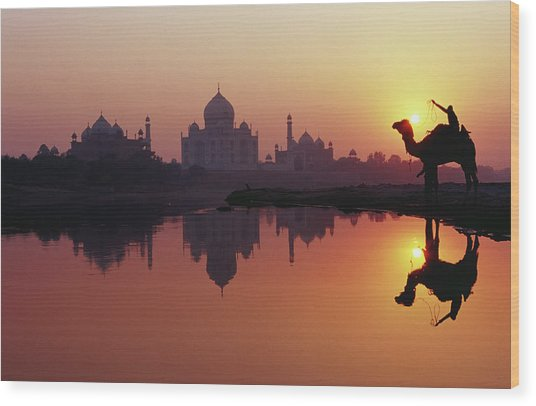 Taj Mahal & Silhouetted Camel & Wood Print by Richard I'anson