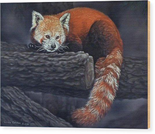 Takeo, The Red Panda Wood Print