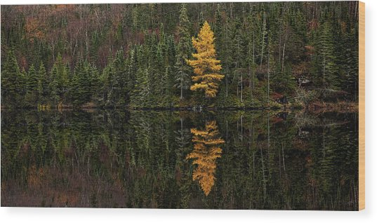 Wood Print featuring the photograph Tamarack Defiance by Doug Gibbons