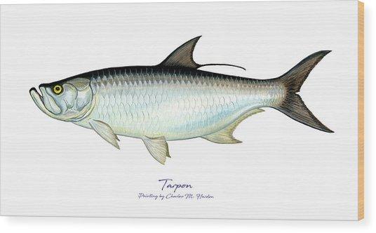 Tarpon Wood Print