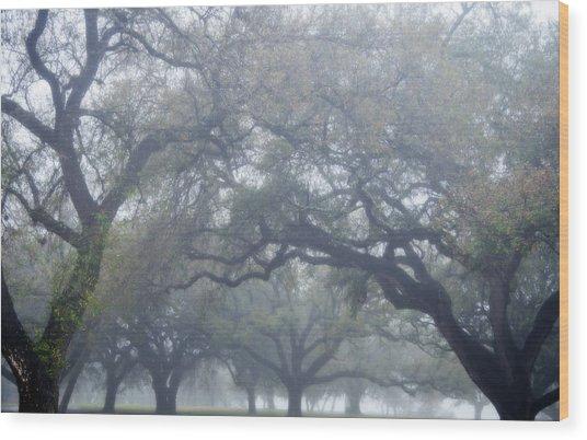 Texas Live Oaks In Fog Wood Print