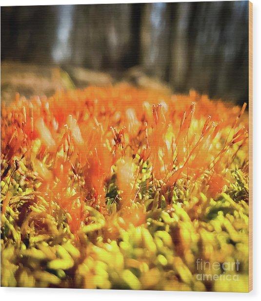 Wood Print featuring the photograph Orange Moss 1 by Atousa Raissyan