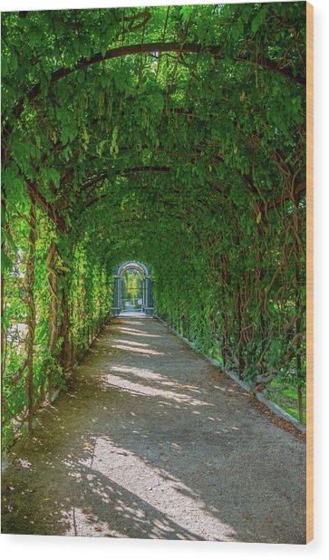 The Alley Of The Ivy Wood Print