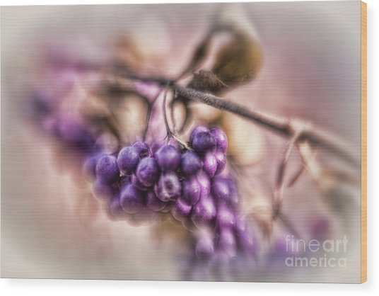 The American Beautyberry Wood Print