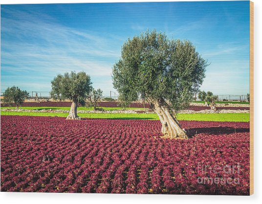 The Beautiful And Colorful Landscapes Wood Print by Sabino Parente