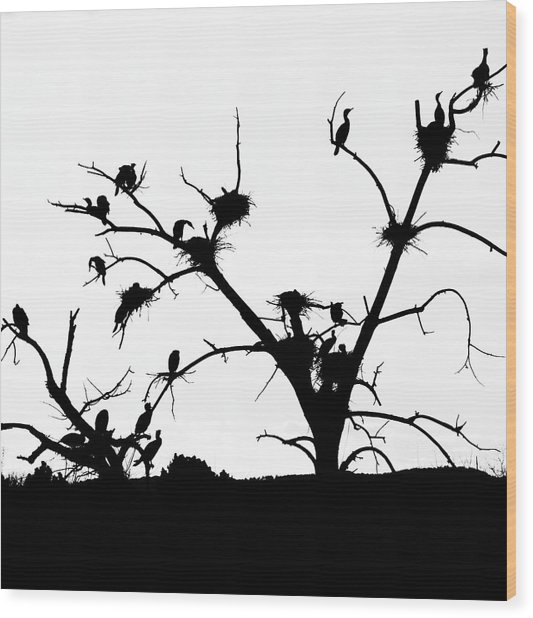 The Birds Wood Print