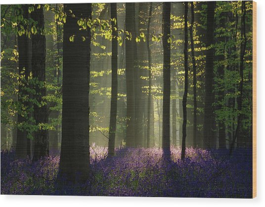 The Bluebells Wood Print