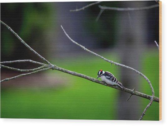 The Downey Woodpecker Wood Print