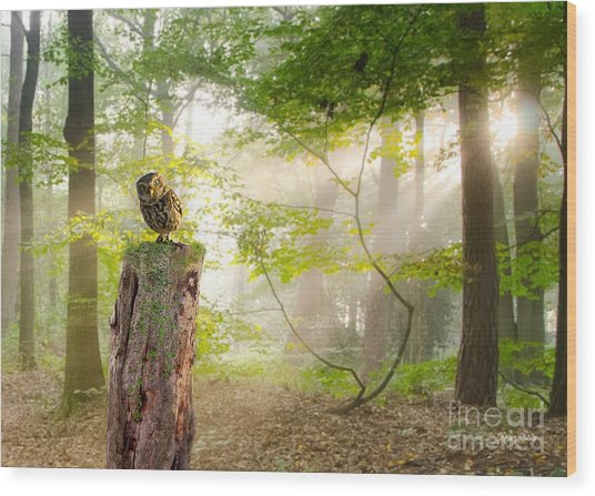 The Enchanted Forrest Wood Print