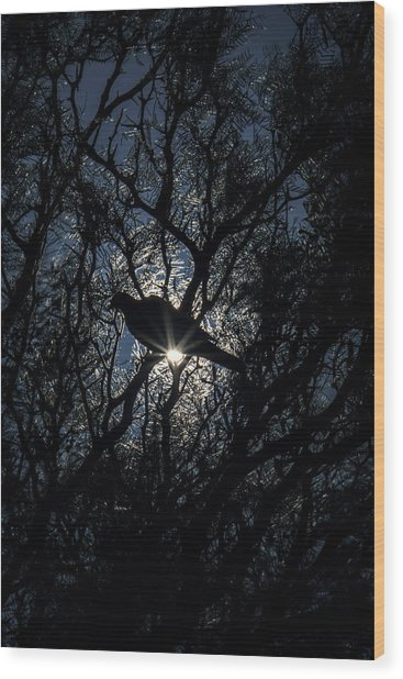 The Enlightened Dove Wood Print