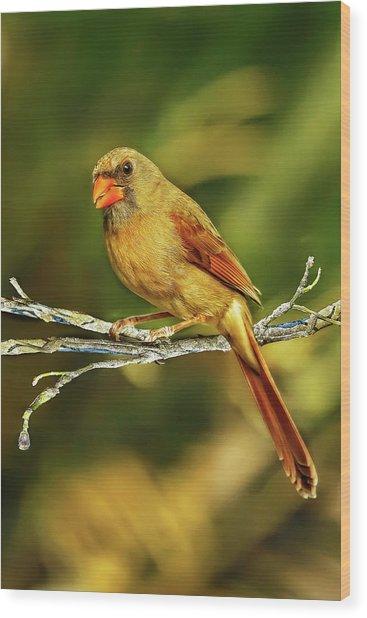 The Female Cardinal Wood Print