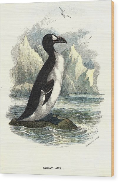 The Great Auk Wood Print by Hulton Archive