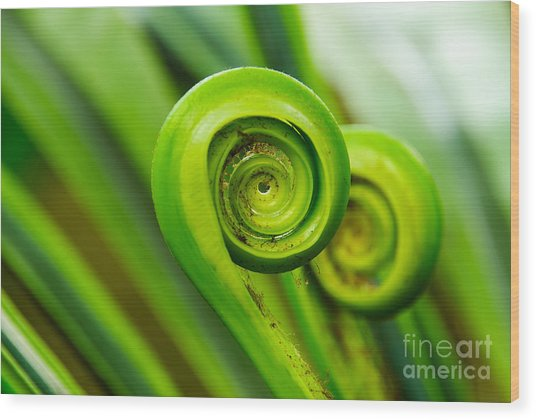 The Green Fern Origin  To In The Nature Wood Print